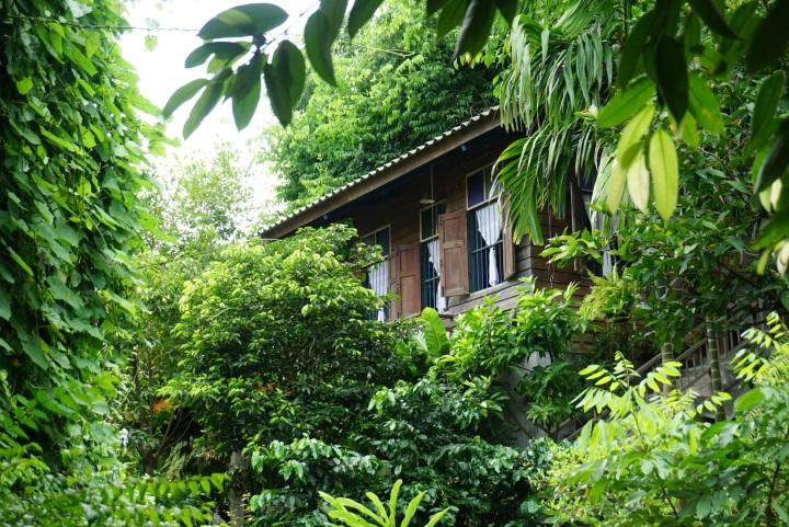 【Chiangmai 清邁】Green Season的清邁~