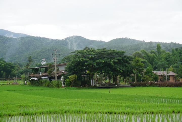【清邁】泰國明星婚禮場地轉成的稻田咖啡館 Brandnew Field GoodCafe
